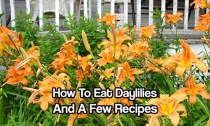 How To Eat Daylilies And A Few Recipes