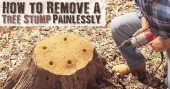 How to Remove a Tree Stump Painlessly - The process isn't quick by any means but it's effective and will save you hundreds!