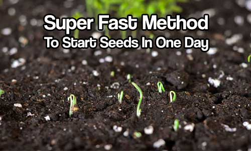 Super Fast Method To Start Seeds In One Day