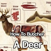 How To Butcher A Deer