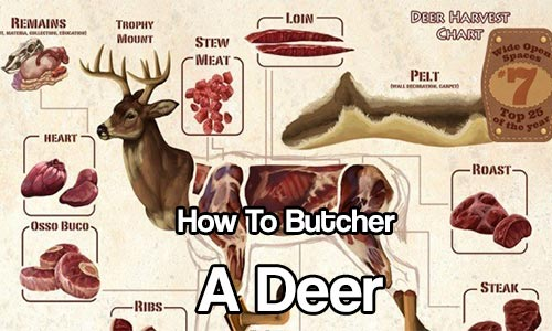 How To Butcher A Deer - See where you get the different cuts of meat from and learn how to butcher a deer!