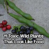 11 Toxic Wild Plants That Look Like Food