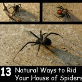 Keep Spiders Out of Your Home Naturally - Spraying store bought chemicals to rid your home of spiders is OK and it works but if you want to spray something natural that won't harm your pets and children this article is for you.