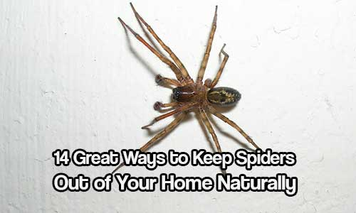 keep spiders out of your home naturally shtf prepping