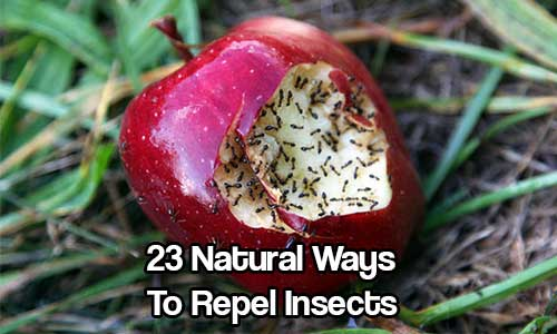 23 Natural Ways To Repel Insects Shtf Prepping Central