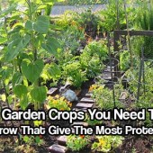 5 Garden Crops You Need To Grow That Give The Most Protein - In a SHTF situation, you will need all the protein you can get. Animals will not be easy to catch for their meats so rely on these 5 vegetables to get you your daily intake of proteins and stay above the rest.