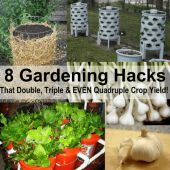 8 Outstanding Gardening Hacks - By combining tried and true gardening methods with more recently implemented ones (such as growing vertically), you will be able to load up your counters, and therefore your pantry with a fantastic harvest! The best part – all it took was using a few tips and tricks gathered from around the internet and put into one convenient place!