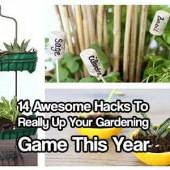 14 Awesome Hacks To Really Up Your Gardening Game This Year