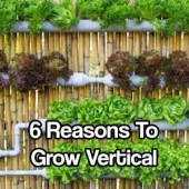 6 Reasons to Grow Vertical