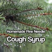 Homemade Pine Needle Cough Syrup