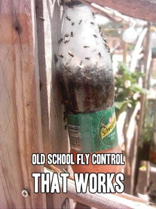 Old School Fly Control That Works - Are flies driving you crazy this year? They seem to be out of contro in my area! Get them under control with this old school fly trap.