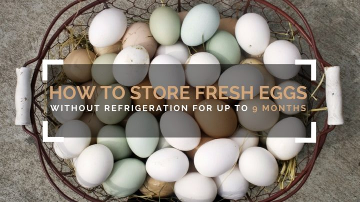 How To Store Fresh Eggs Without Refrigeration For Up To 9 Months