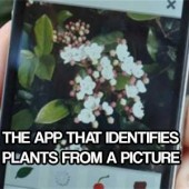 THE APP THAT IDENTIFIES PLANTS FROM A PICTURE
