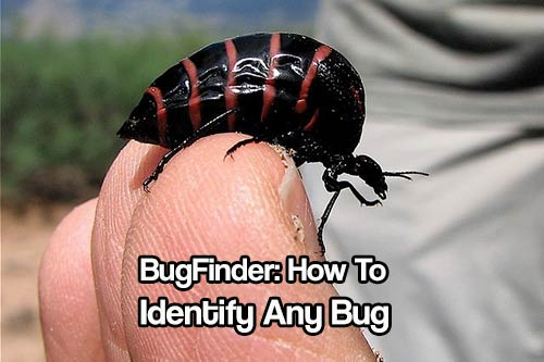 BugFinder: How To Identify Any Bug - BugFinder allows for a quick search of the database by selecting primary color, secondary color, number of legs and the territory or state in question. This works great and worth a bookmark.