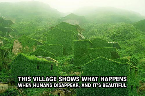 This Village Shows What Happens When Humans Disappear, And It's Beautiful - See a collection of photographs of this abandoned fishing village and be in awe like I am. It literally looks like the buildings have grown up from the ground.