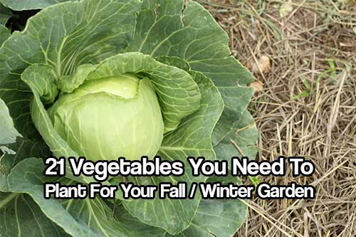 Remarkable Winter Garden Vegetables Plants Pictures To Pin On Pinterest  With Magnificent Winter  With Cool How To Decorate Garden Also The Garden Andrew Marvell In Addition Garden Chair Cushions Wilkinsons And Kids Garden Accessories As Well As Where Is Longmeadow Garden Additionally Bbc Gardeners World Presenters From Pinsdaddycom With   Magnificent Winter Garden Vegetables Plants Pictures To Pin On Pinterest  With Cool Winter  And Remarkable How To Decorate Garden Also The Garden Andrew Marvell In Addition Garden Chair Cushions Wilkinsons From Pinsdaddycom