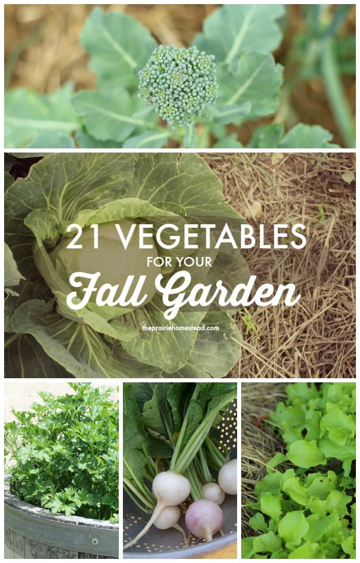 21 Vegetables You Need To Plant For Your Fall / Winter Garden - With the main gardening season coming to an end, it's time to start thinking about your fall / winter garden. There are still plenty of vegetables that will grow well into the fall / winter. Micro greens do especially well in the fall. They are packed to the brim with nutrients. Image Credit: theprairiehomestead.com