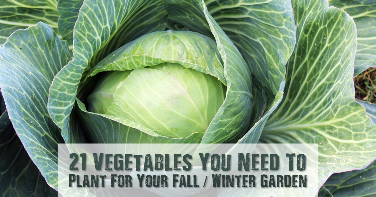21 Vegetables You Need To Plant For Your Fall / Winter Garden - With the main gardening season coming to an end, it's time to start thinking about your fall / winter garden. There are still plenty of vegetables that will grow well into the fall / winter. Micro greens do especially well in the fall. They are packed to the brim with nutrients.