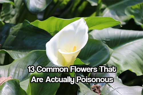 13 Common Flowers That Are Actually Poisonous