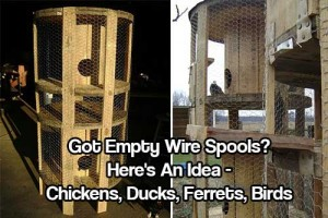 Got Empty Wire Spools? Here's An Idea - Got Empty Wire Spools? Here's An Idea - Check out this awesome idea, this could be used for ducks, pigeons, ferrets, rabbits and even chickens!
