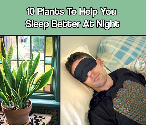 10 Houseplants To Help You Sleep Better At Night - Getting a good night's sleep isn't a luxury, it is absolutely essential to being able to function properly during waking hours.