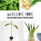 30 Delicious Herbs, Fruits And Vegetables You Can Grow From Scraps