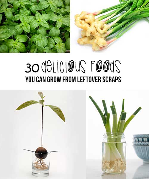 30 Delicious Herbs, Fruits And Vegetables You Can Grow