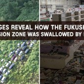 Images-Reveal-How-The-Fukushima-Exclusion-Zone-Was-Swallowed-By-Nature