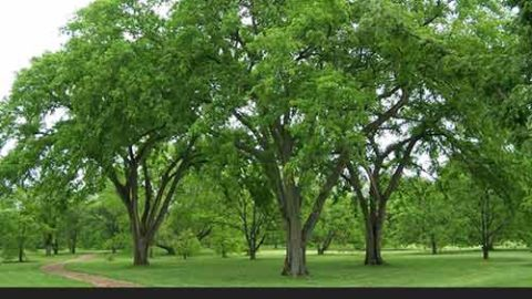 13 Trees You SHOULD Start Growing in Your Yard and Why