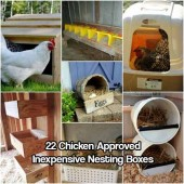 22 Chicken Approved Inexpensive Nesting Boxes