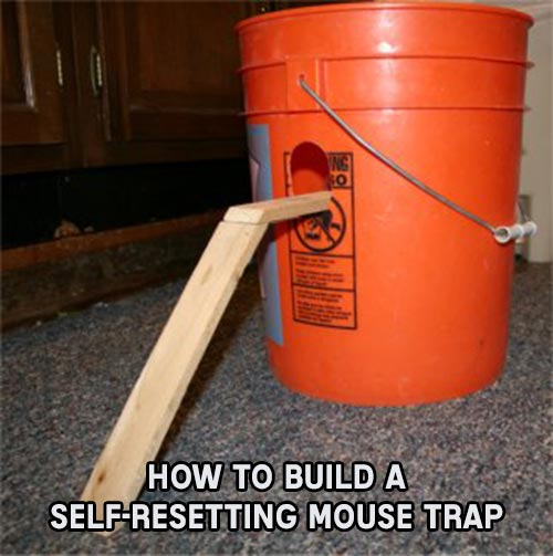 How To Build A Self Resetting Mouse Trap Shtf Amp Prepping