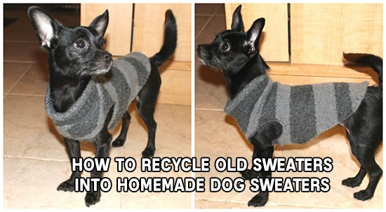How To Recycle Old Sweaters Into Homemade Dog Sweaters