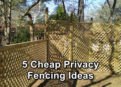 5 cheap privacy fencing ideas shtf prepping