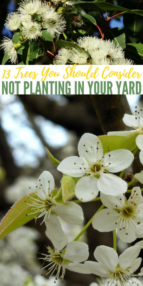 13 Trees You Should Consider NOT Planting In Your Yard