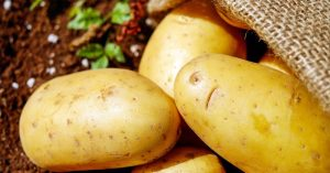 How To Grow Dirt-Free Potatoes - Still, it's unusual enough so that when we tell people we grow our potatoes in a pile of hay they look at us kind of funny. Although we've discovered that telling some of our gardening tales makes people look at us kind of funny anyway…