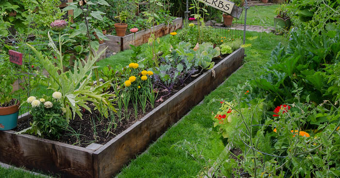 5 Situations that Call for Raised Beds