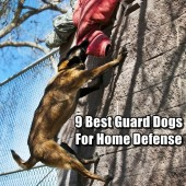 9 Best Guard Dogs For Home Defense
