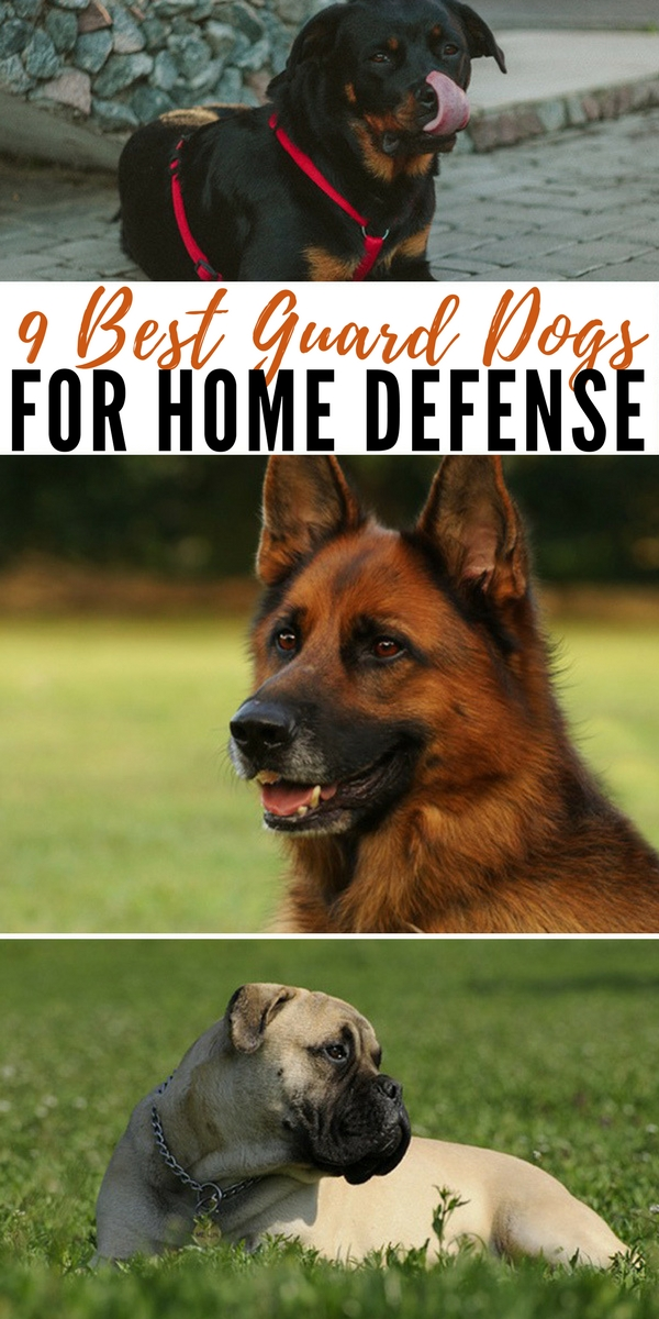 9 Best Guard Dogs For Home Defense - tips