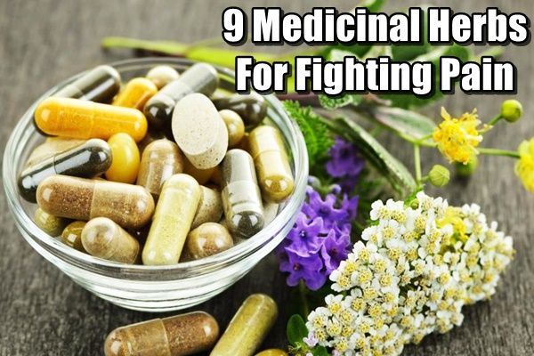 9 Medicinal Herbs For Fighting Pain