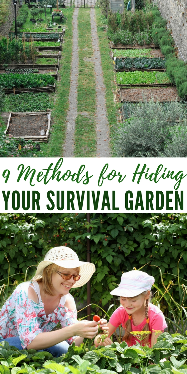 9 Methods for Hiding Your Survival Garden - One morning you go outside to harvest some corn, but you stop dead in your tracks. The backyard gate has been kicked open, half the garden has been destroyed, and all the fruits and veggies are gone. Someone must have raided your garden in the middle of the night. This is why anyone with a survival garden should think about ways to hide it. 9 Methods for Hiding Your Survival Garden