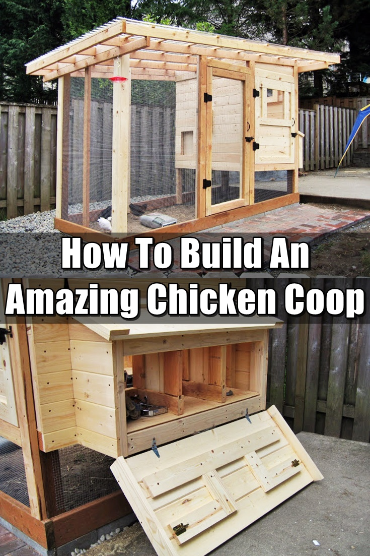 How To Make Chicken Coop Pictures to pin on Pinterest