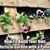 How To Build Your Own Vertical Garden with a Pallet