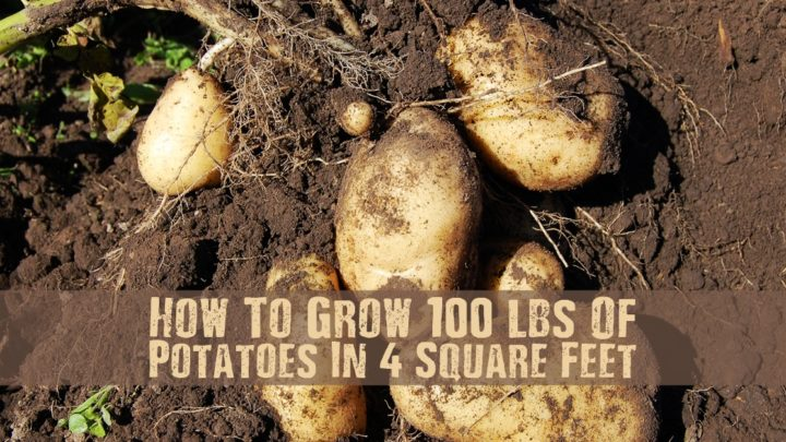 How To Grow 100 lbs Of Potatoes In 4 Square Feet