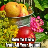How To Grow Fruit All Year Round FB