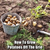 How To Grow Potatoes Off The Grid