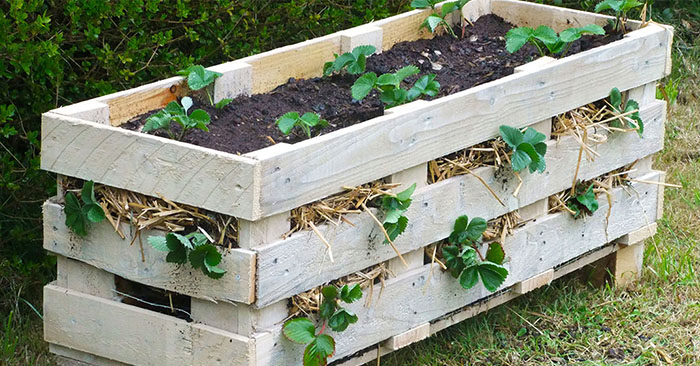 How to Make a Better Strawberry Pallet Planter - There are many places you can find pallets for free. Just make sure they are heat treated (HT) and safe to use.