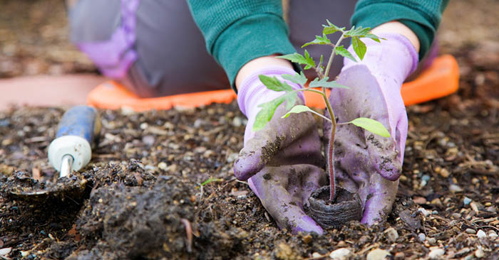 Garden Planting Calendar When To Exactly Start Your Crops This Seed Calculator Tells You