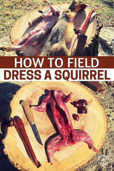 How to Field Dress a Squirrel - The hunter-gatherer spirit inside each of us is slowly vanishing and so are the important self-reliant skills associated with hunting, gathering, and preparing our own food. Remember if SHTF, there will be no supermarkets, Walmart and the like will be gutted in 3 days. This will be a way of life so print this info off. You may just need it one day!