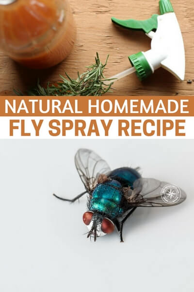 Natural Homemade Fly Spray Recipe - Fly spray in the stores cost about 4 bucks a ...