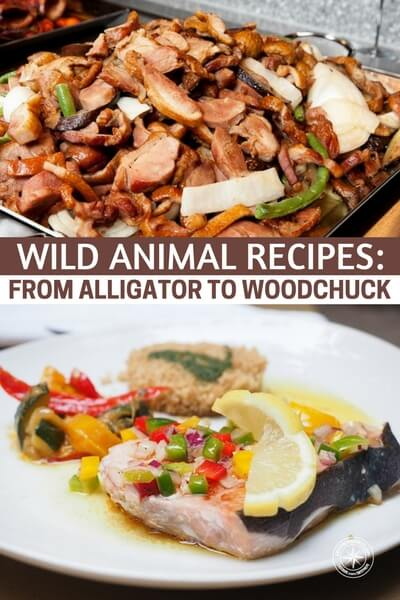 Wild Animal Recipes: From Alligator To Woodchuck - Its always good to have something like this as a go to if you had to catch your own protein source in any emergency situation. Choose your favorite recipes and print them out.